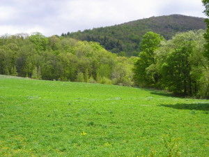 property in stephentown, ny 010