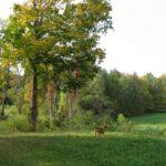 Eric backyard dog 2